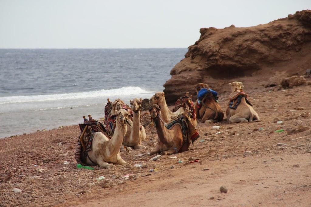 Экскурсии из Шарм-эль-Шейха, Голубая дыра, верблюды