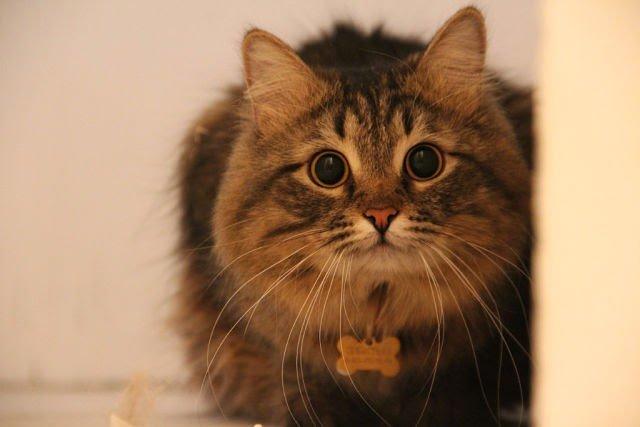 Автопутешествие с котом