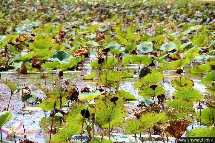 Озеро лотосов Вьетнам, мУйне