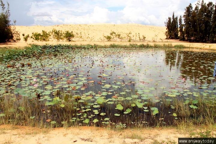 Озеро лотосов, вьетнам, муйне