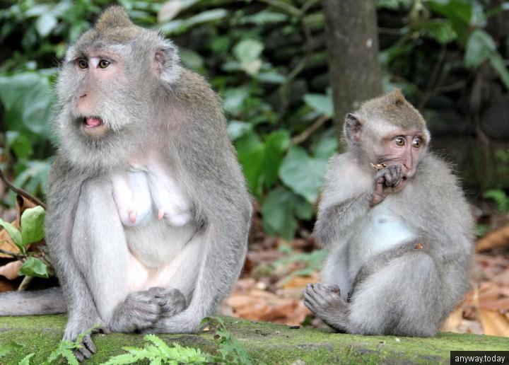 Лес обезьян Убуд